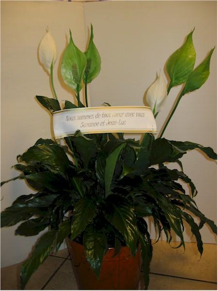 Fleuriste corbeilles fun raires montr al laval for Commande plante en ligne